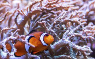 L'Aquarium de Lyon, un lieu unique pour les petits et les grands !