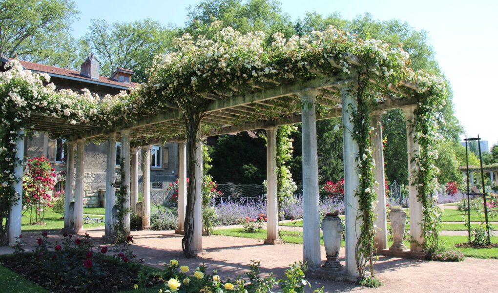 La Roseraie: un lieu de douceur et de couleurs au cœur du Parc de la Tête d'Or